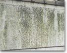 タケガワ塗装 外壁にカビ-藻がついている