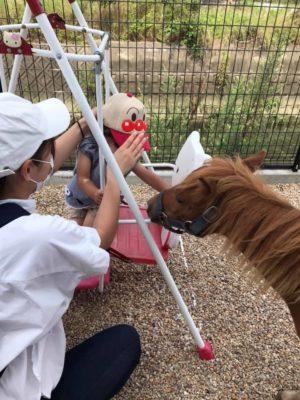 タケガワふれあい動物園 子ども 2歳児 ミニチュアホース