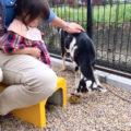 タケガワふれあい動物園 松阪市 子ども ヤギ 触れ合える