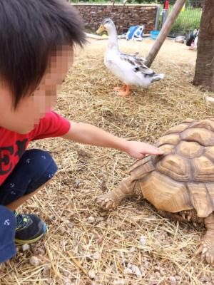 タケガワふれあい動物園 リクガメ 子ども 小学生