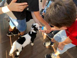 タケガワふれあい動物園 子ヤギのミルクやり体験