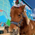 タケガワふれあい動物園 クリスマス