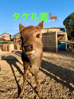 タケガワふれあい動物園 バンビ タケル君 小鹿