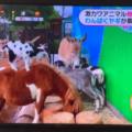 めざましテレビ タケガワふれあい動物園