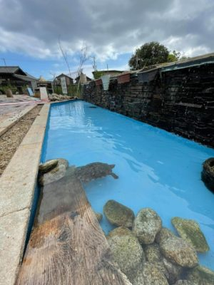 アヒルの池 塗り替え後 タケガワふれあい動物園 タケガワ塗装