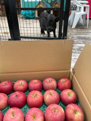 タケガワふれあい動物園 リンゴの寄付